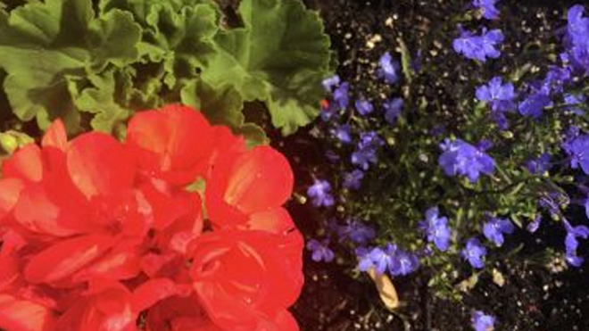 Complimentary Color Gardening